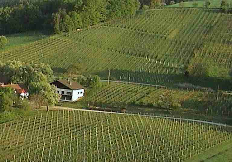 http://www.eitljoergwein.at/data/image/thumpnail/image.php?image=172/eitljoerg_buschenschank_article_3342_0.jpg&width=768